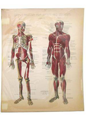 anatomy for art students